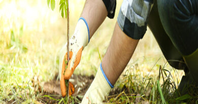 Trees – The Care Takers of Our Planet