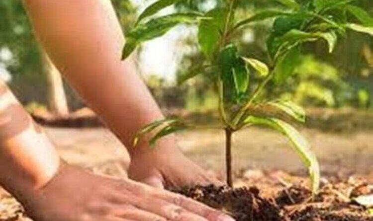 70 लोगों के बीच 200 पौधों का वितरण किया गया