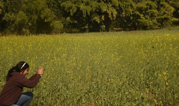 सरसों के लहलहाते खेत को अपने कैमरे में कैद करती युवती