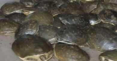 Turtle travels on the train in Jharkhand