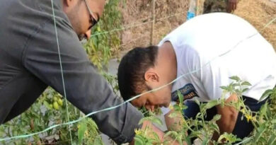 Vegetables produced in Dhoni's farm are expected to be sold at UAE
