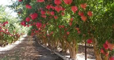 Over 26 lakh fruit bearing trees planted in Jharkhand this fiscal