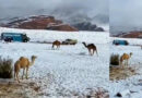 टेक्सास और साऊदी में भारी बर्फ़बारी से वैज्ञानिक परेशान! जानिये ग्लोबल वार्मिंग कैसे डाल रहा है असर