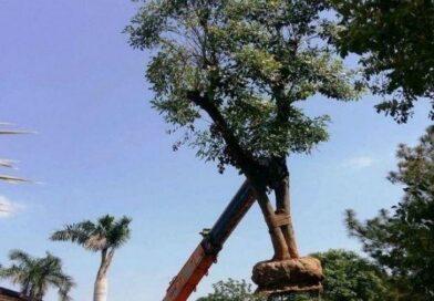 हाईवे बनाने के लिए 12 हजार पेड़ों का किया ट्रांसप्लांट, केन्द्रीय मंत्री नितिन गडकरी ने जताई ख़ुशी