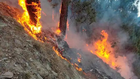 Ranchi forest division rolls out QRTs to detect forest fires