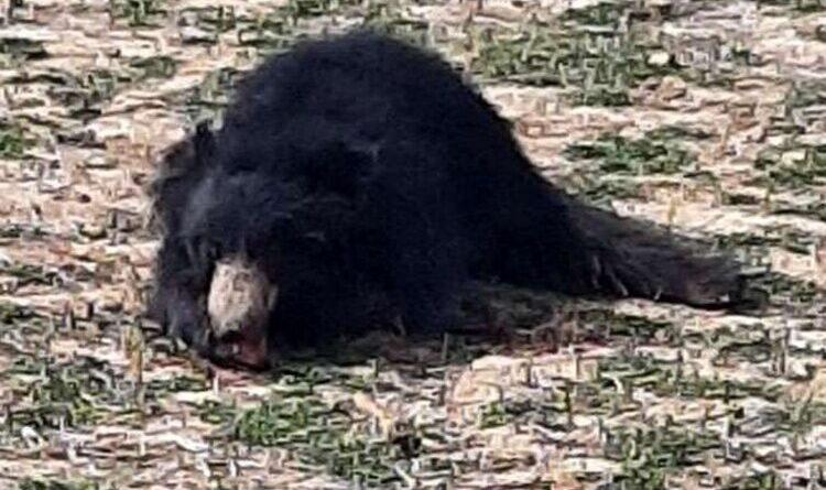 ग्रामीणों के खदेड़ने से भालू की मौत