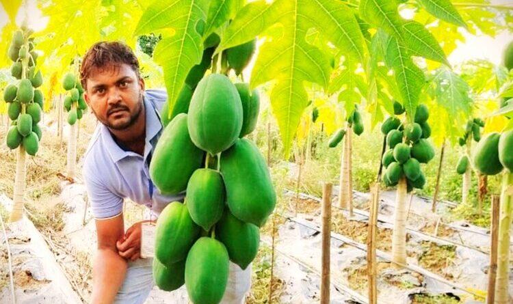 रंग ला रही खेती के जरिए पर्यावरण बचाने और कमाने की मुहिम