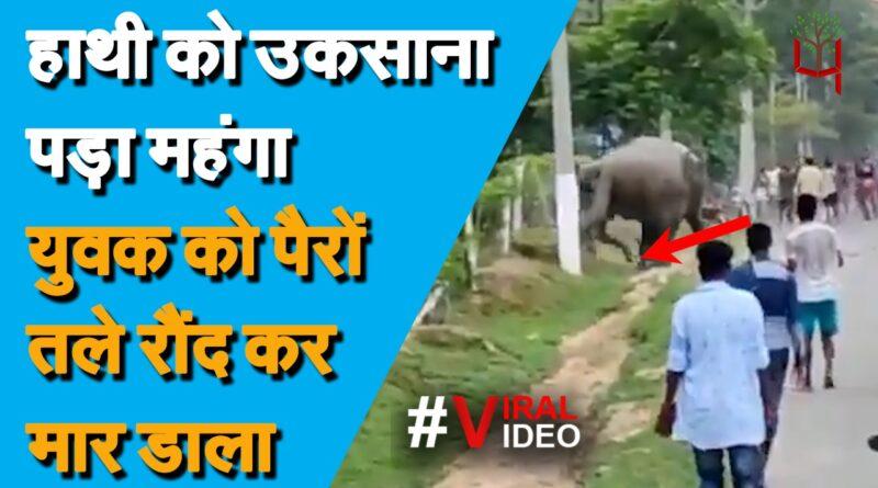हाथियों के झुंड  को उकसाना पड़ा महंगा, हाथी को आया गुस्सा तो मचाया ऐसा तांडव, देखें Viral Video