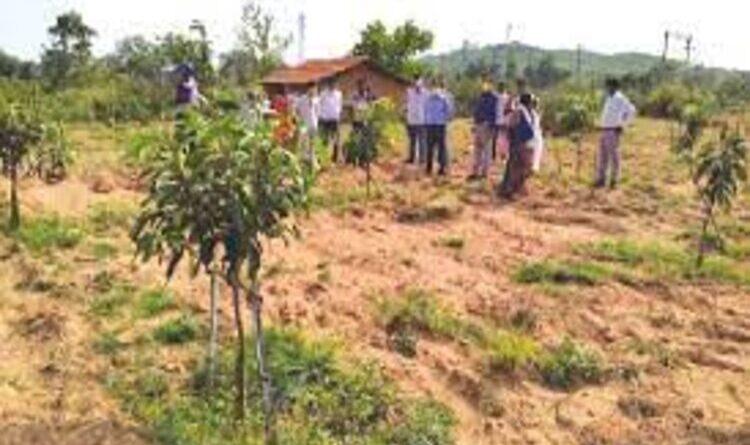 चांदो में बिरसा हरित आम बागवानी योजना का शुभारंभ