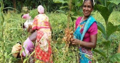 दीदी नर्सरी योजना से आर्थिक रूप से आत्मनिर्भर बन रहे हैं कई झारखंड के किसान