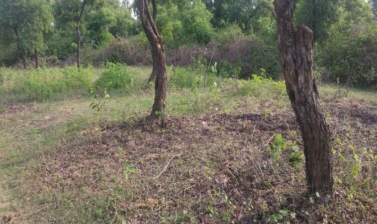 लॉकडाउन का फायदा उठाकर लोग कर रहे जंगल को बर्बाद
