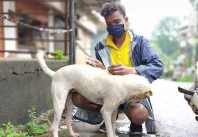World Rabies Day: रेबीज से हर साल हजारों लोगों की मौत, कुत्ता पालते है तो हो जाएं सावधान