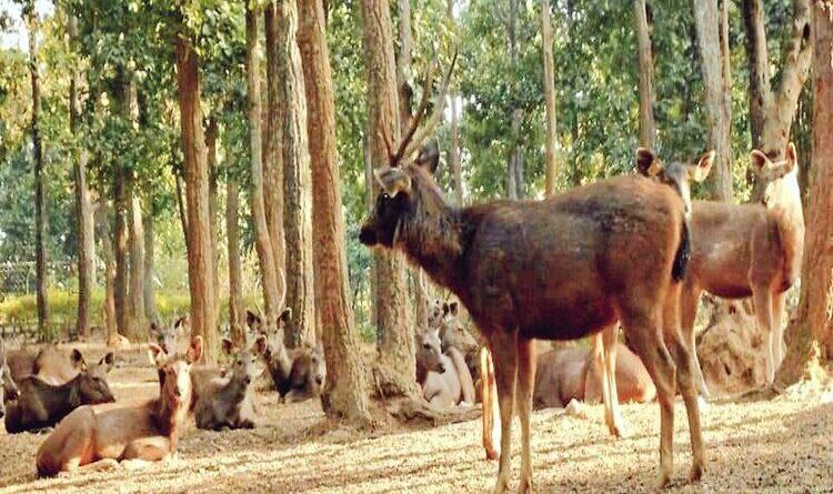 कुलांचे भरते हिरणों को देखना है तो पहुंचे बिरसा मृग विहार